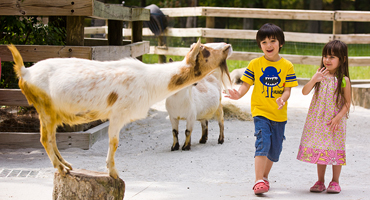 Stone Mountain Park Farmyard